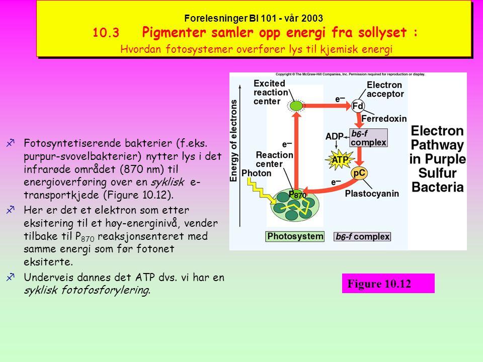 Forelesninger BI 101 - vår 2003 10.3 Pigmenter samler opp energi fra sollyset : Pigmentenes organisering i fotosystemer fAntenne-komplekset er en samling av klorofyllmolekyler og karotenoider (Figure 10.10) i en matriks av proteiner.