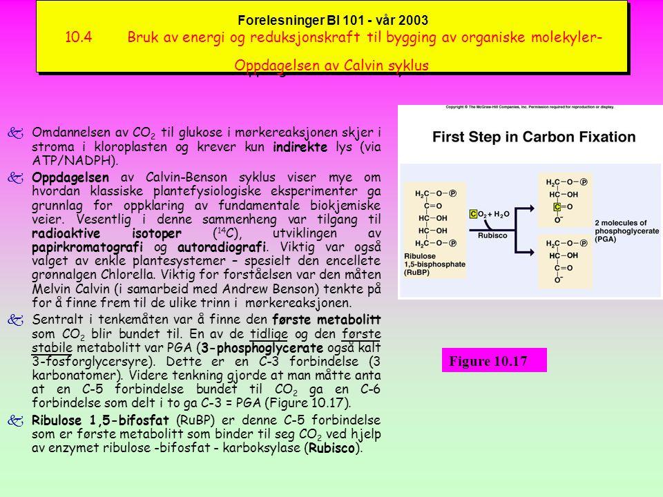 Forelesninger BI 101 - vår 2003 Bruk av energi og reduksjonskraft til bygging og nedbrytning av organiske molekyler kEnergi-dannelsen i kloroplaster må sees i sammenheng med energi- dannelsen i mitokondrier (Figure 10.18).