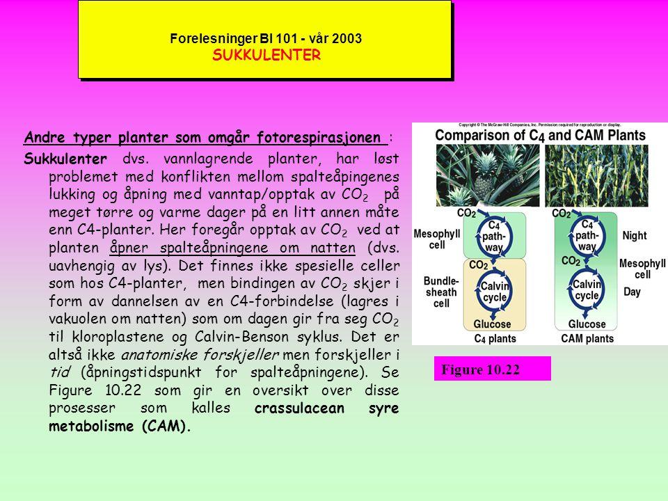Forelesninger BI 101 - vår 2003 FOTORESPIRASJON kC4-plantene er altså istand til å gjennomføre en fotosyntese på meget tørre og varme dager hvor normale planter (C3-planter) må holde spalteåpningene lukket for å redusere vanntapet som skjer gjennom transpirasjonen.