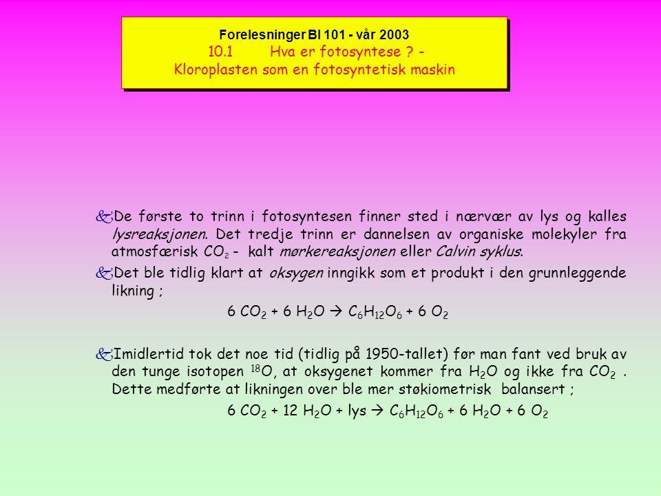Forelesninger BI 101 - vår 2003 Reaksjoner i Calvin syklus kI en serie reaksjoner (Figure 10.19) bindes 3 molekyler CO 2 av Rubisco for å produsere 6 molekyler PGA.