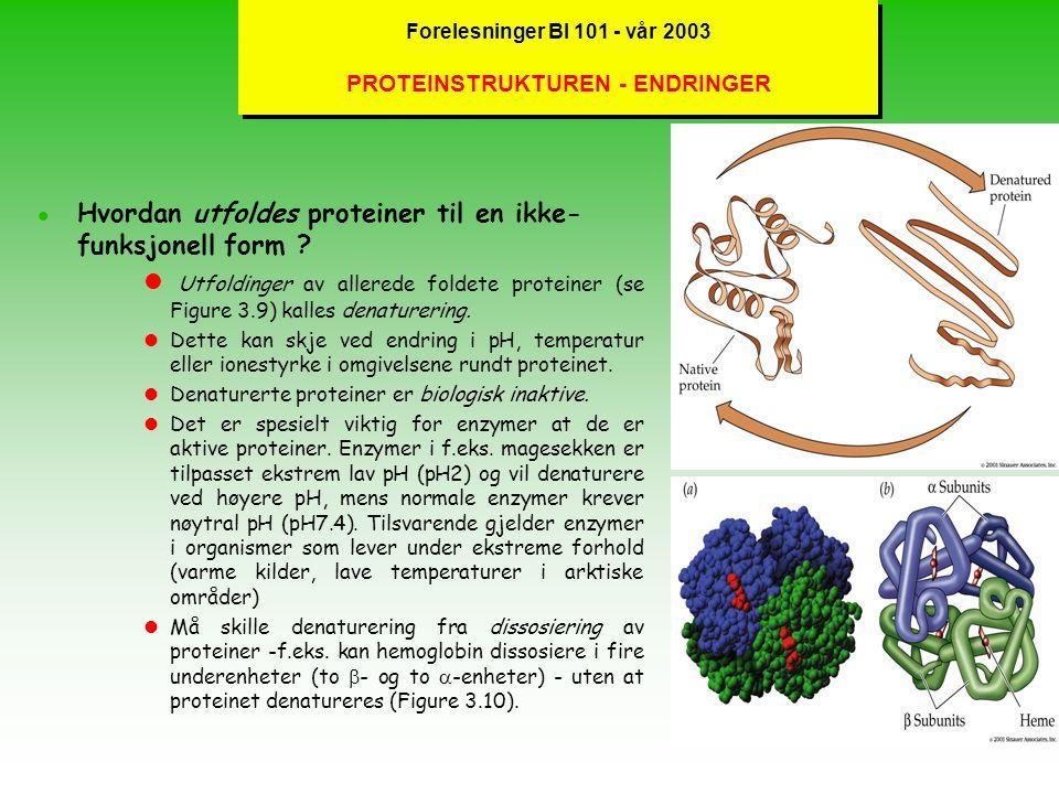 Forelesninger BI 101 - vår 2003 PROTEINSTRUKTUREN - FOLDINGER l Hvordan foldes proteiner til en funksjonell form ? l Foldinger av polypeptidet (se Fig