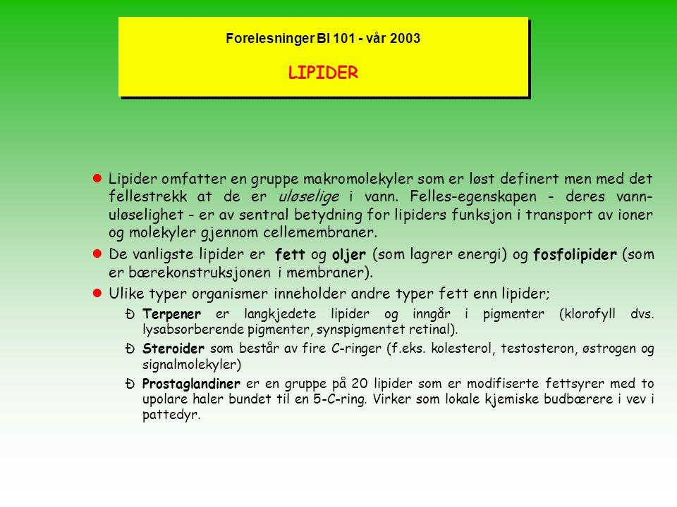 """Forelesninger BI 101 - vår 2003 Trenger vi et """"Gen-Krim"""" ? l Kronikk i Aftenposten ; mange positive reaksjoner for at et slikt behov bør dekkes l Oppg"""
