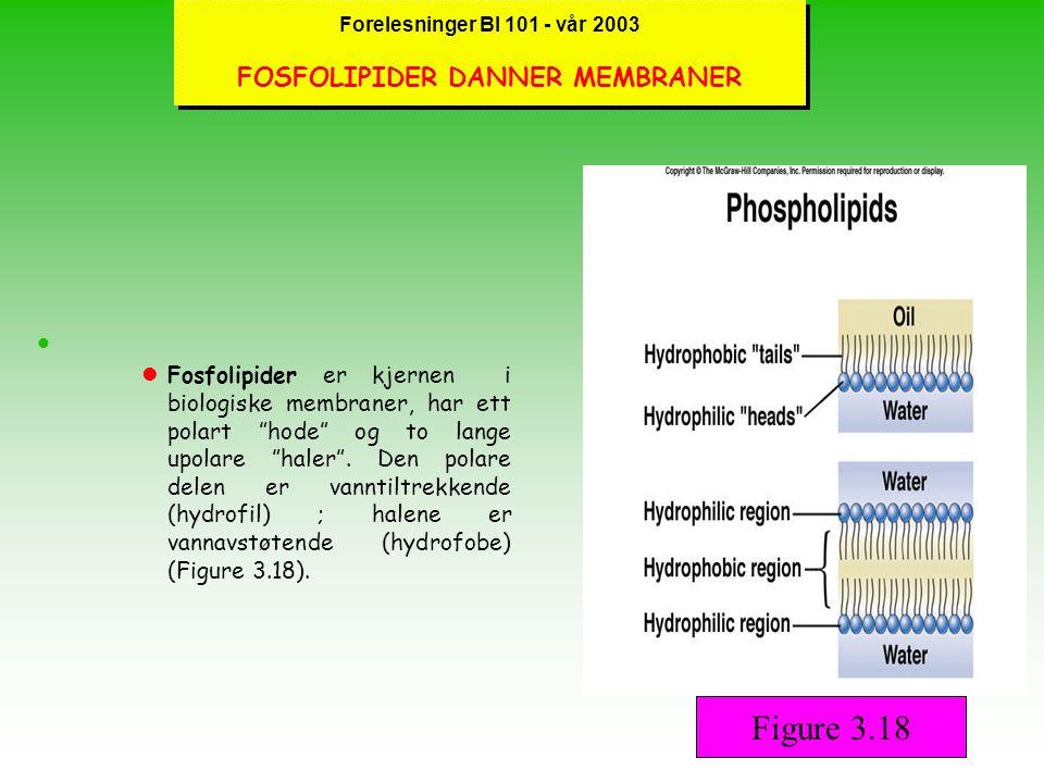Forelesninger BI 101 - vår 2003 LIPIDER lLipider omfatter en gruppe makromolekyler som er løst definert men med det fellestrekk at de er uløselige i vann.