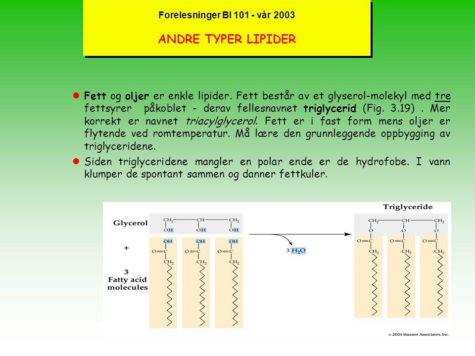 Forelesninger BI 101 - vår 2003 FOSFOLIPIDER DANNER MEMBRANER l lPhosphatidyl-cholin er et eksempel på et fosfolipid lFosfolipidet generelt består av