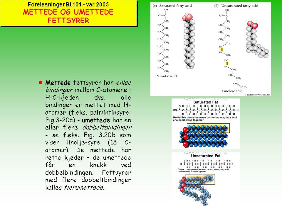 Forelesninger BI 101 - vår 2003 ANDRE TYPER LIPIDER lFett og oljer er enkle lipider. Fett består av et glyserol-molekyl med tre fettsyrer påkoblet - d
