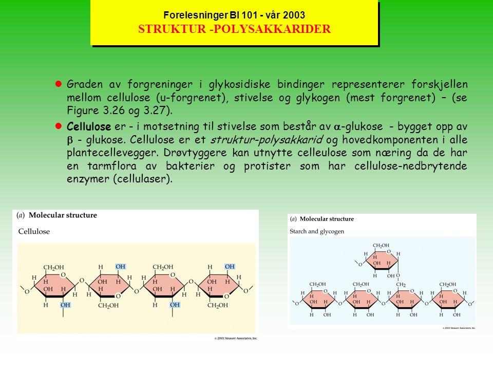 Forelesninger BI 101 - vår 2003 LAGRINGS-POLYSAKKARIDER lOrganismene lagrer metabolsk energi i monosakkarider ved å overføre dem til disakkarider (f.eks.