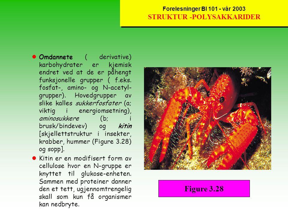 Forelesninger BI 101 - vår 2003 STRUKTUR -POLYSAKKARIDER lGraden av forgreninger i glykosidiske bindinger representerer forskjellen mellom cellulose (