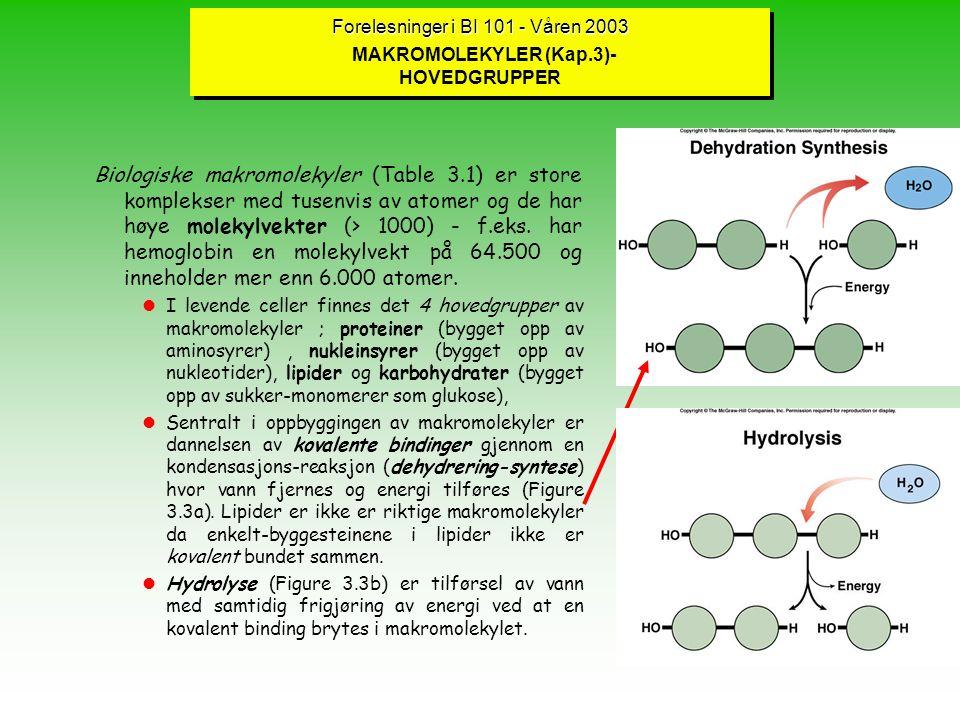 Forelesninger i BI 101 - Våren 2003 Forelesninger i BI 101 - Våren 2003 MAKROMOLEKYLER (Kap.3)- HOVEDGRUPPER Biologiske makromolekyler (Table 3.1) er store komplekser med tusenvis av atomer og de har høye molekylvekter (> 1000) - f.eks.