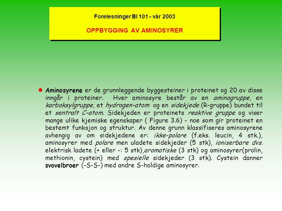 Forelesninger BI 101 - vår 2003 PROTEINER - ULIKE TYPER Proteiner er bygget opp av et antall av maksimalt 20 ulike aminosyrer og foldet i rommet til e