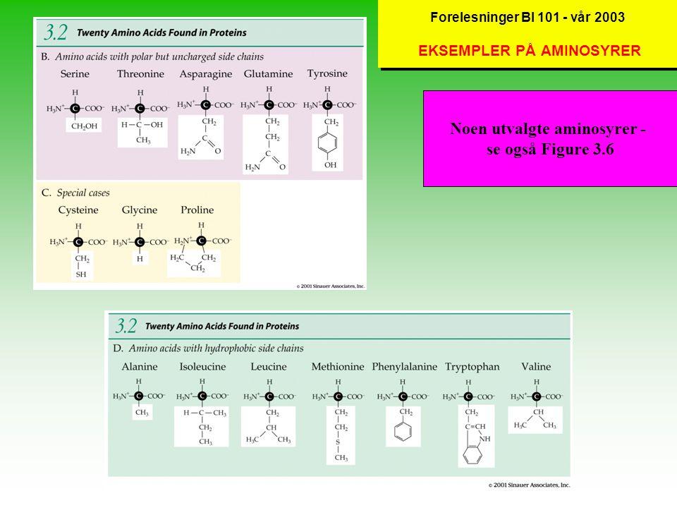 Forelesninger BI 101 - vår 2003 EKSEMPLER PÅ AMINOSYRER Noen utvalgte aminosyrer - se også Figure 3.6