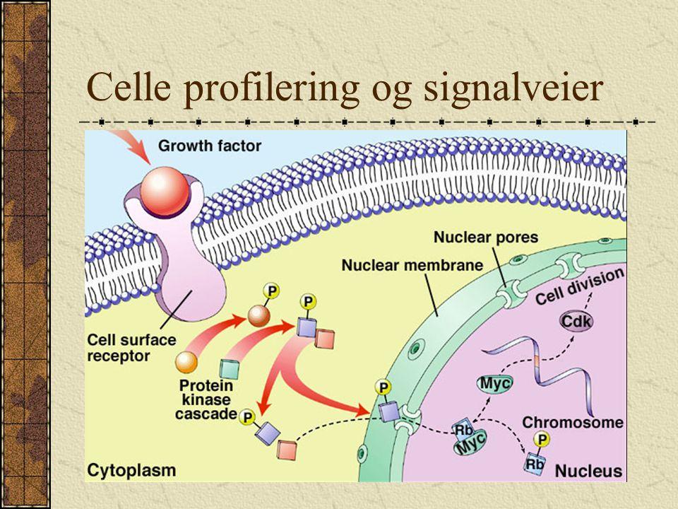 Celle profilering og signalveier