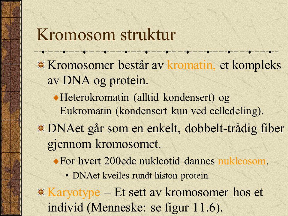 Kromosom struktur Kromosomer består av kromatin, et kompleks av DNA og protein. Heterokromatin (alltid kondensert) og Eukromatin (kondensert kun ved c