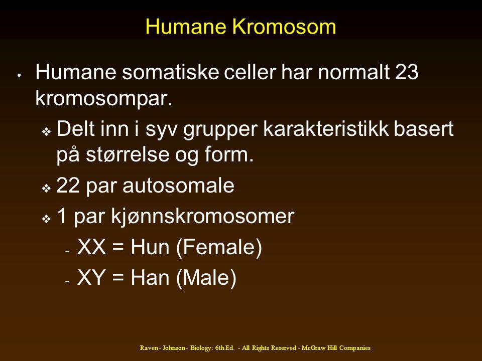 Humane Kromosom Humane somatiske celler har normalt 23 kromosompar.  Delt inn i syv grupper karakteristikk basert på størrelse og form.  22 par auto