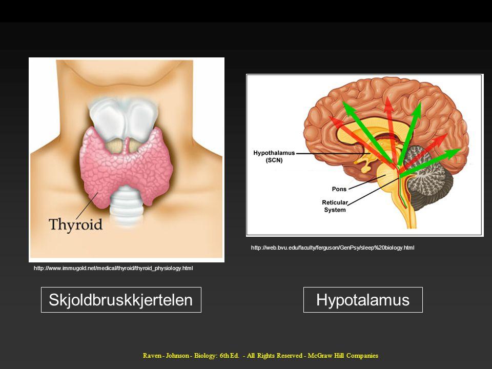 http://www.immugold.net/medical/thyroid/thyroid_physiology.html http://web.bvu.edu/faculty/ferguson/GenPsy/sleep%20biology.html SkjoldbruskkjertelenHypotalamus