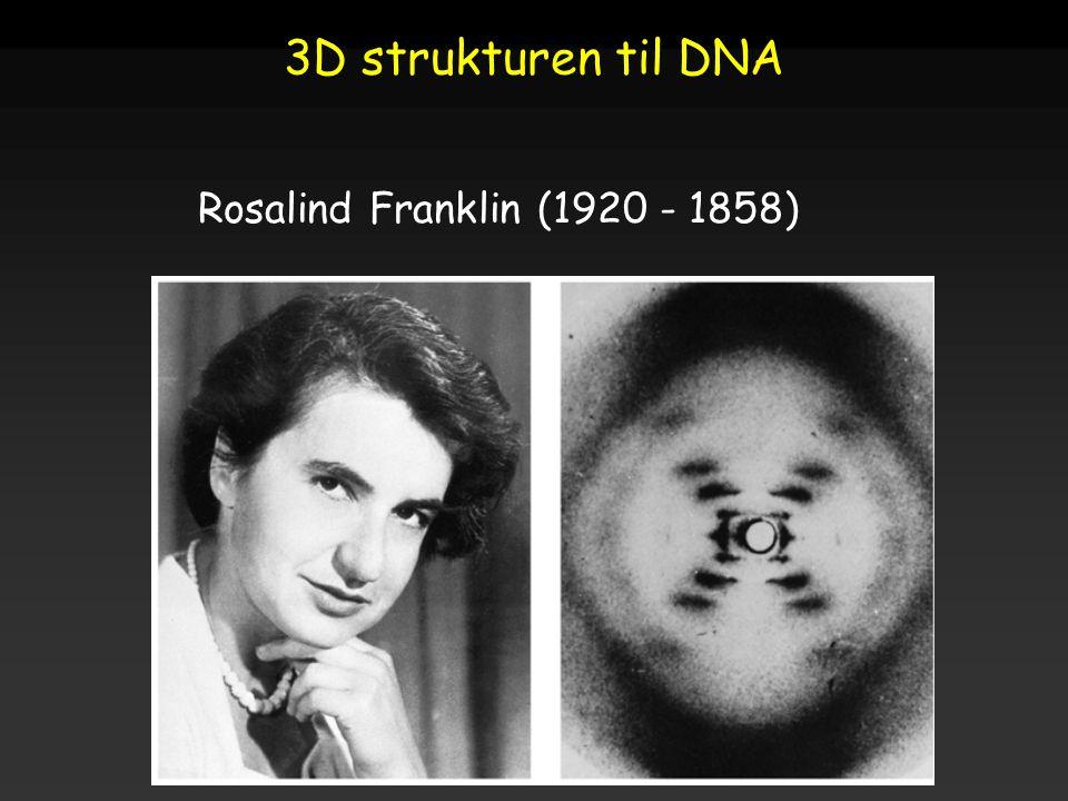 Raven - Johnson - Biology: 6th Ed. - All Rights Reserved - McGraw Hill Companies Rosalind Franklin (1920 - 1858) 3D strukturen til DNA