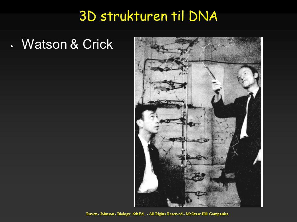 Raven - Johnson - Biology: 6th Ed. - All Rights Reserved - McGraw Hill Companies 3D strukturen til DNA Watson & Crick