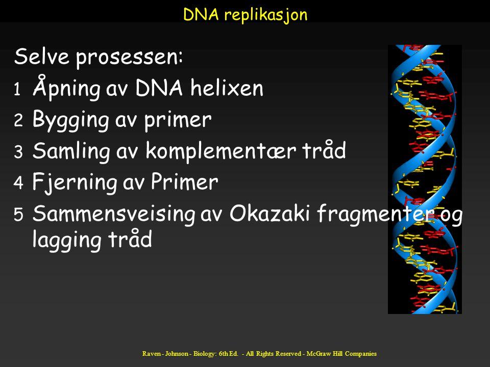 Raven - Johnson - Biology: 6th Ed. - All Rights Reserved - McGraw Hill Companies DNA replikasjon Selve prosessen: 1 Åpning av DNA helixen 2 Bygging av