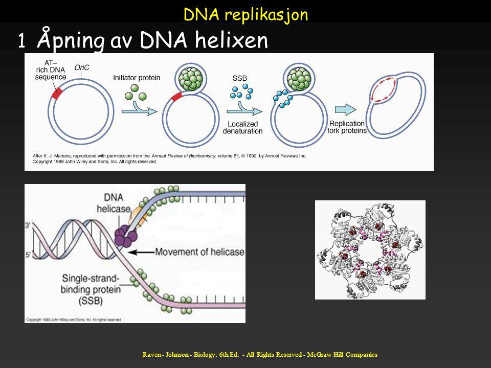 Raven - Johnson - Biology: 6th Ed. - All Rights Reserved - McGraw Hill Companies DNA replikasjon 1 Åpning av DNA helixen