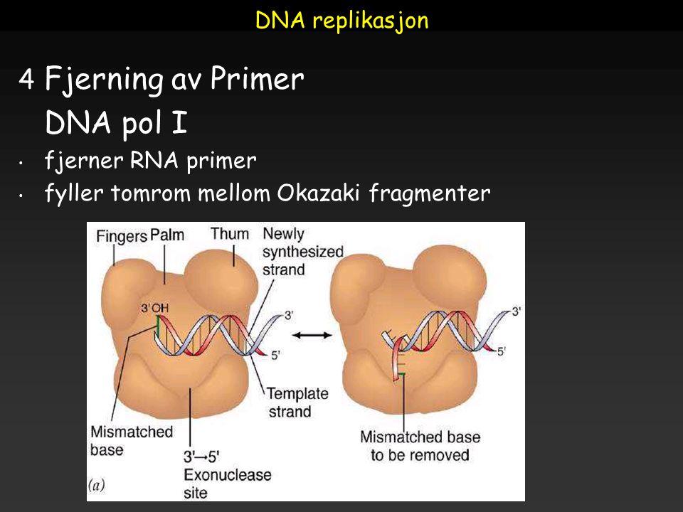 DNA replikasjon 4 Fjerning av Primer DNA pol I fjerner RNA primer fyller tomrom mellom Okazaki fragmenter