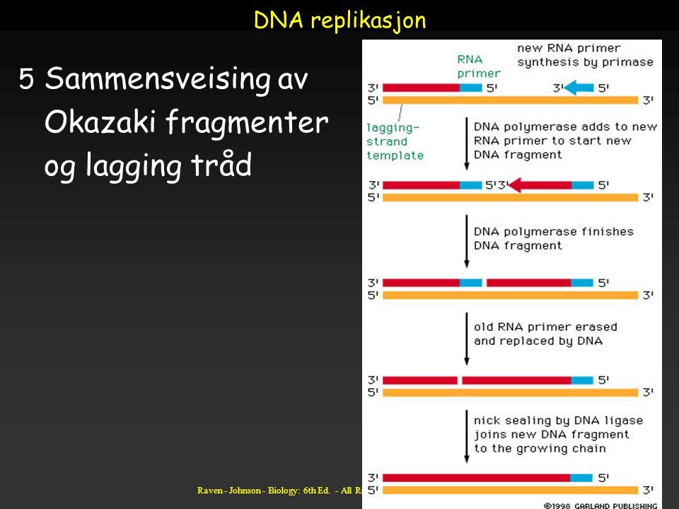 Raven - Johnson - Biology: 6th Ed. - All Rights Reserved - McGraw Hill Companies DNA replikasjon 5 Sammensveising av Okazaki fragmenter og lagging trå