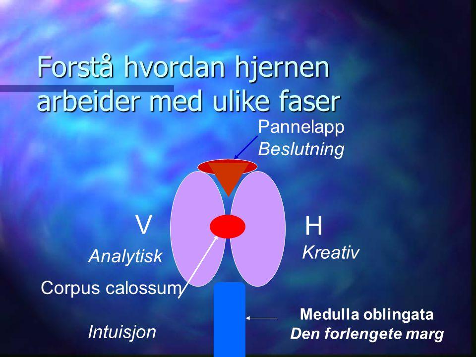 Forstå hvordan hjernen arbeider med ulike faser H V Kreativ Analytisk Intuisjon Corpus calossum Pannelapp Beslutning Medulla oblingata Den forlengete