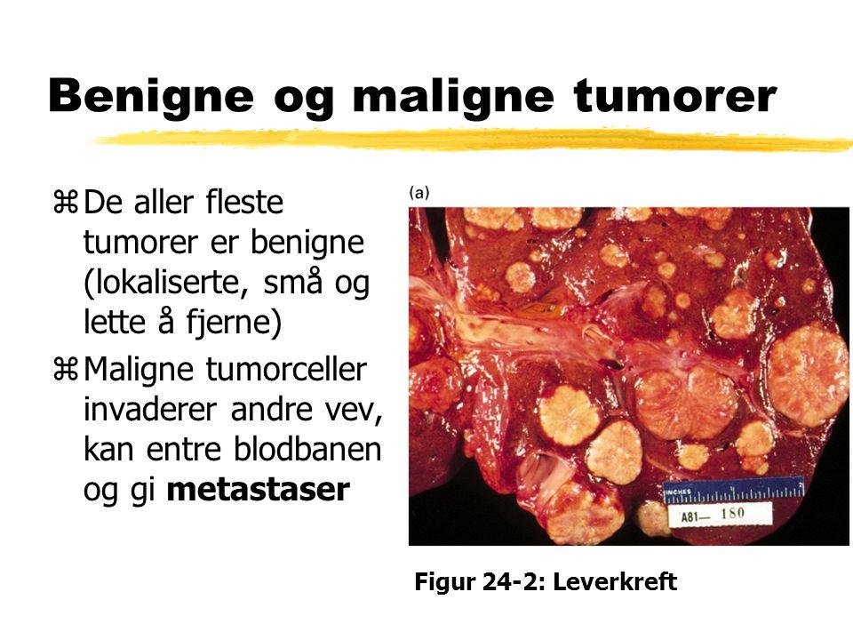 To viktige forskjeller mellom kreft og andre genetiske sykdommer: zKreft skyldes oftest mutasjoner i somatiske celler zEn kreftsvulst er resultat av mellom 3 og 20 mutasjoner Figur 24-1: Benign tumor (rectum)