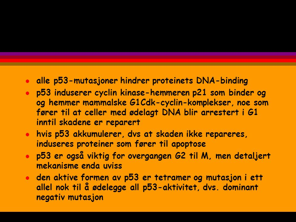 l alle p53-mutasjoner hindrer proteinets DNA-binding l p53 induserer cyclin kinase-hemmeren p21 som binder og og hemmer mammalske G1Cdk-cyclin-komplek