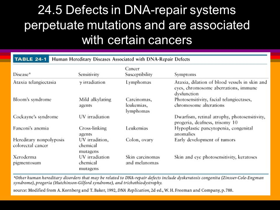 24.5 Defects in DNA-repair systems perpetuate mutations and are associated with certain cancers