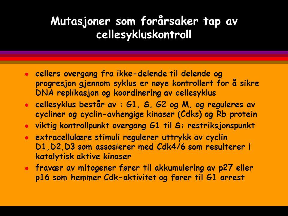 Cellesyklus