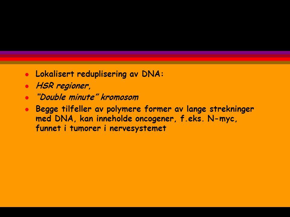 """l Lokalisert reduplisering av DNA: l HSR regioner, l """"Double minute"""" kromosom l Begge tilfeller av polymere former av lange strekninger med DNA, kan i"""