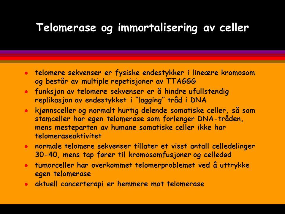 Telomerase og immortalisering av celler l telomere sekvenser er fysiske endestykker i lineære kromosom og består av multiple repetisjoner av TTAGGG l