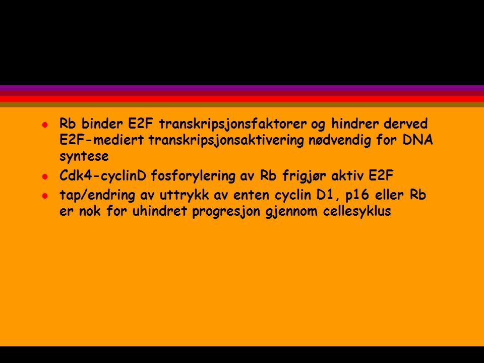 l Rb binder E2F transkripsjonsfaktorer og hindrer derved E2F-mediert transkripsjonsaktivering nødvendig for DNA syntese l Cdk4-cyclinD fosforylering a