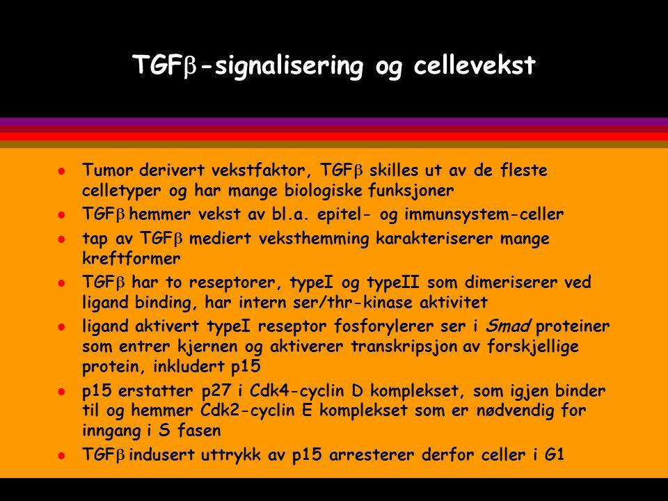 l overuttrykk av protooncogenet cyclin D1 eller tap av tumorsuppressorgenene p16 eller Rb kan føre til uregulert passage gjennom cellesyklus restriksjonspunktet seint i G1 TGF  induserer uttrykk av p15 som fører til arrest i G1 og dessuten syntese av extracellulære matrix proteiner tap av TGF  reseptorer eller Smad4 ødelegger TGF  regulert vekstkontroll