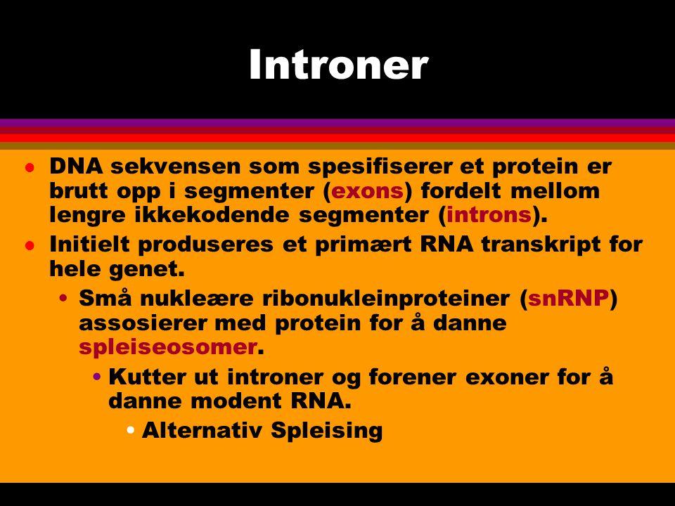 Introner l DNA sekvensen som spesifiserer et protein er brutt opp i segmenter (exons) fordelt mellom lengre ikkekodende segmenter (introns).