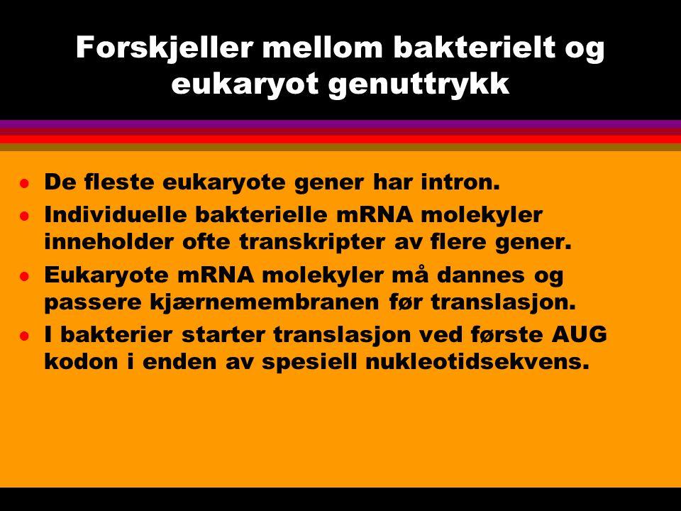 Forskjeller mellom bakterielt og eukaryot genuttrykk l De fleste eukaryote gener har intron.