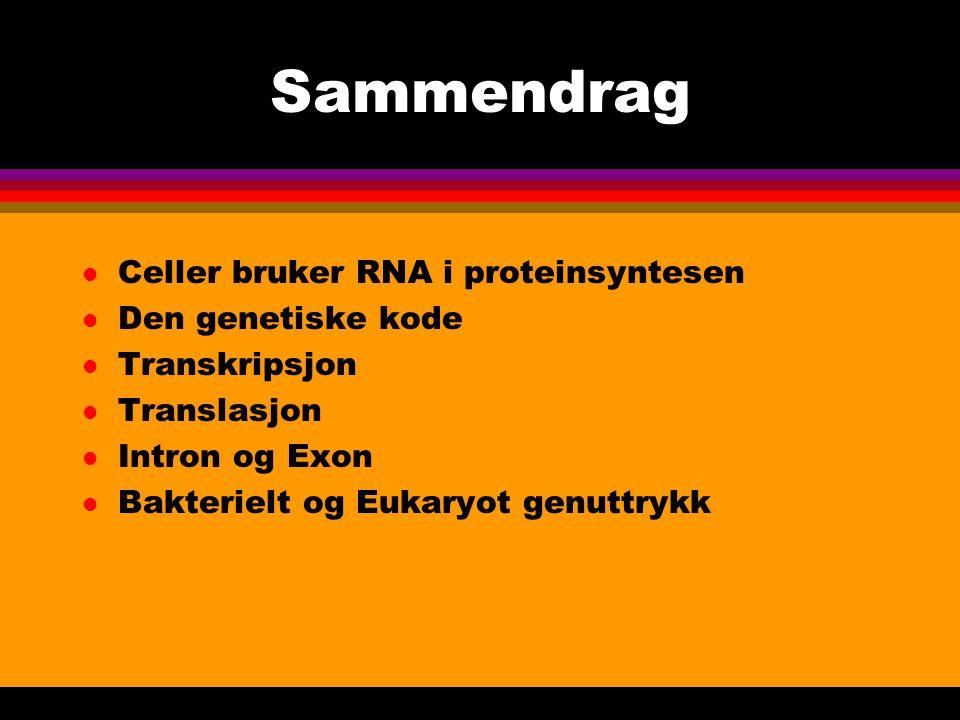 Sammendrag l Celler bruker RNA i proteinsyntesen l Den genetiske kode l Transkripsjon l Translasjon l Intron og Exon l Bakterielt og Eukaryot genuttrykk