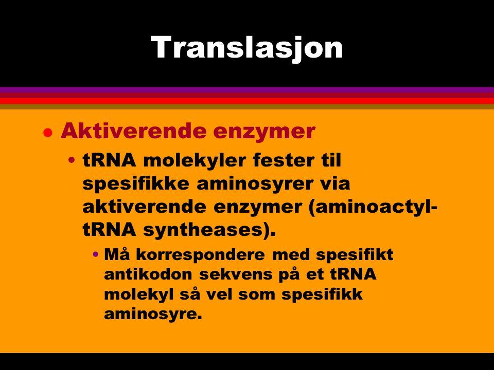 Translasjon l Aktiverende enzymer tRNA molekyler fester til spesifikke aminosyrer via aktiverende enzymer (aminoactyl- tRNA syntheases).