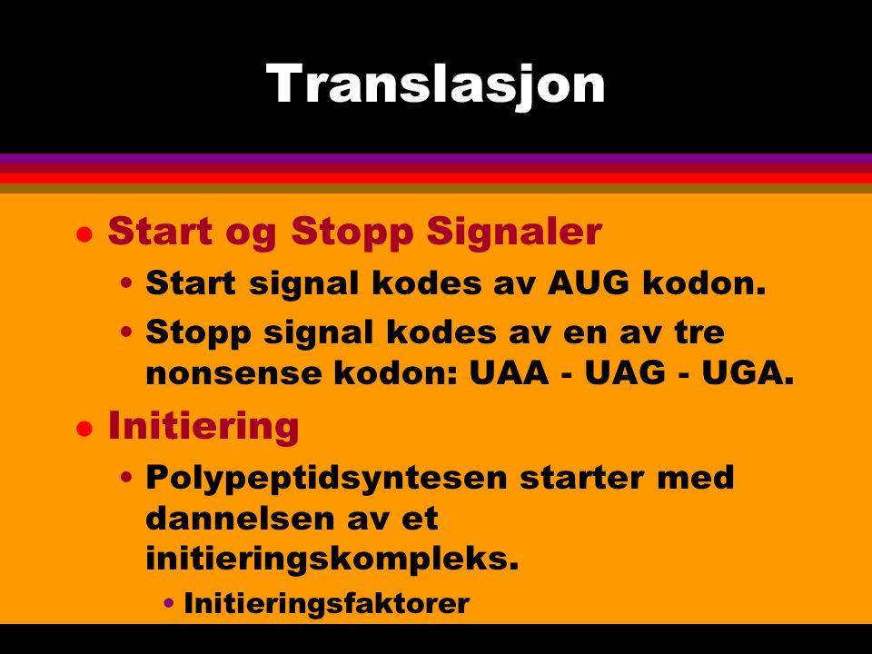 Translasjon l Start og Stopp Signaler Start signal kodes av AUG kodon.