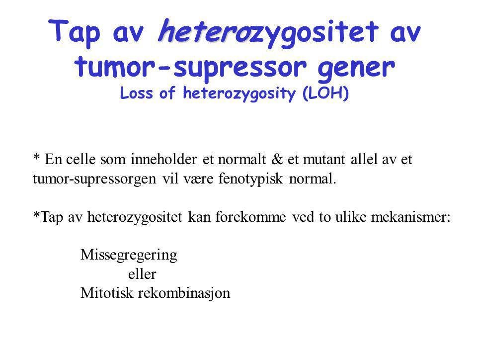 hetero Tap av heterozygositet av tumor-supressor gener Loss of heterozygosity (LOH) * En celle som inneholder et normalt & et mutant allel av et tumor
