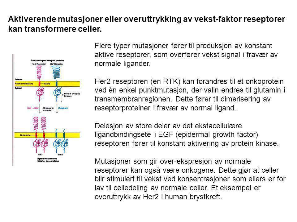 Aktiverende mutasjoner eller overuttrykking av vekst-faktor reseptorer kan transformere celler. Flere typer mutasjoner fører til produksjon av konstan
