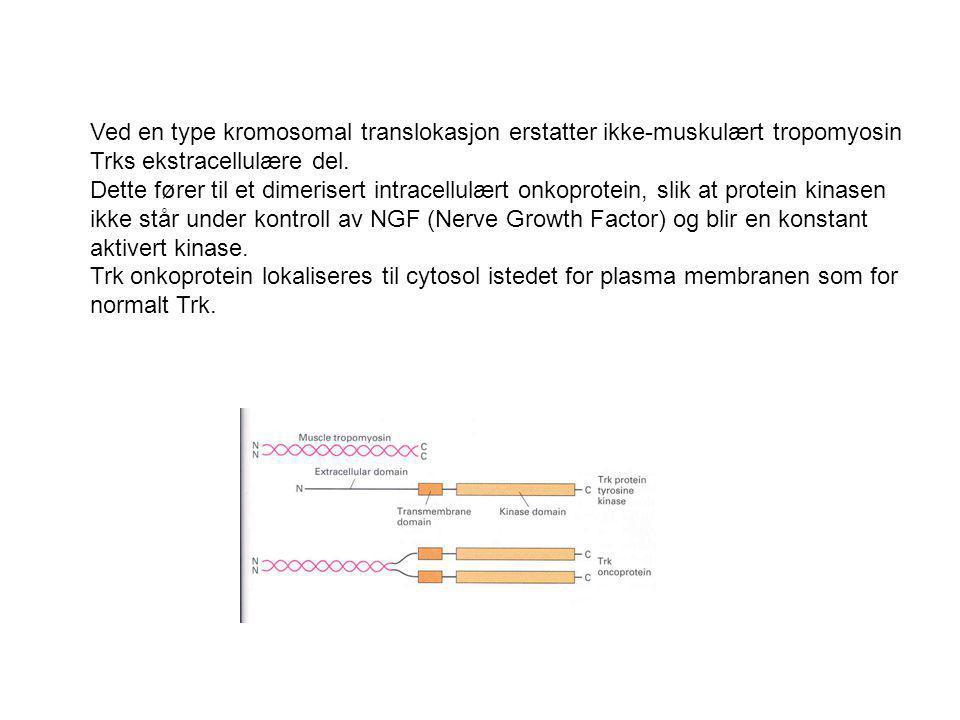 Ved en type kromosomal translokasjon erstatter ikke-muskulært tropomyosin Trks ekstracellulære del. Dette fører til et dimerisert intracellulært onkop