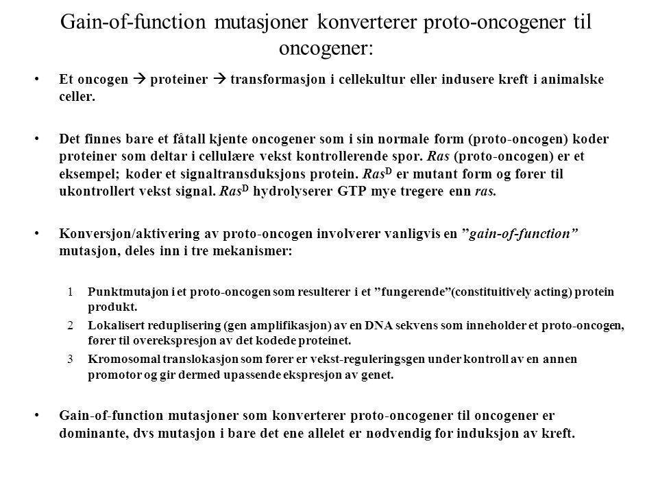 Gain-of-function mutasjoner konverterer proto-oncogener til oncogener: Et oncogen  proteiner  transformasjon i cellekultur eller indusere kreft i an