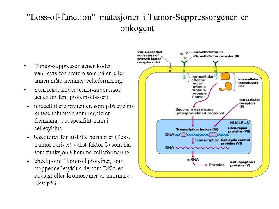 """""""Loss-of-function"""" mutasjoner i Tumor-Suppressorgener er onkogent Tumor-suppressor gener koder vanligvis for protein som på en eller annen måte hemmer"""