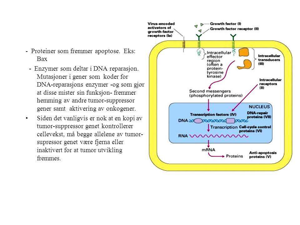 - - Proteiner som fremmer apoptose. Eks: Bax - Enzymer som deltar i DNA reparasjon. Mutasjoner i gener som koder for DNA-reparasjons enzymer -og som g