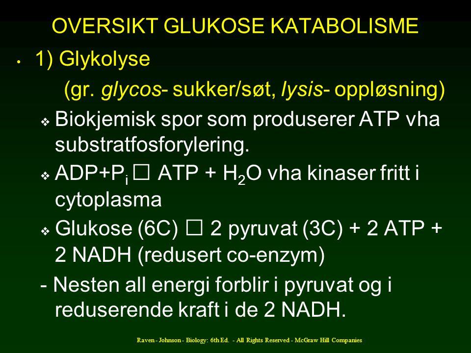 Raven - Johnson - Biology: 6th Ed. - All Rights Reserved - McGraw Hill Companies OVERSIKT GLUKOSE KATABOLISME 1) Glykolyse (gr. glycos- sukker/søt, ly