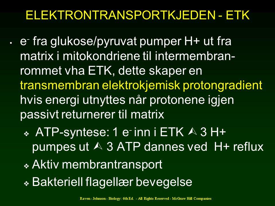 ELEKTRONTRANSPORTKJEDEN - ETK e - fra glukose/pyruvat pumper H+ ut fra matrix i mitokondriene til intermembran- rommet vha ETK, dette skaper en transmembran elektrokjemisk protongradient hvis energi utnyttes når protonene igjen passivt returnerer til matrix  ATP-syntese: 1 e - inn i ETK  3 H+ pumpes ut  3 ATP dannes ved H+ reflux  Aktiv membrantransport  Bakteriell flagellær bevegelse