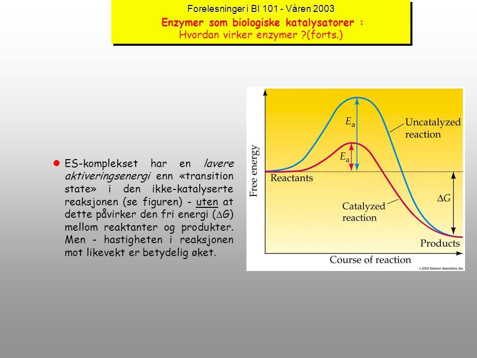 Forelesninger i BI 101 - Våren 2003 Forelesninger i BI 101 - Våren 2003 Enzymer som biologiske katalysatorer : Hvordan virker enzymer ?(forts.) lI de