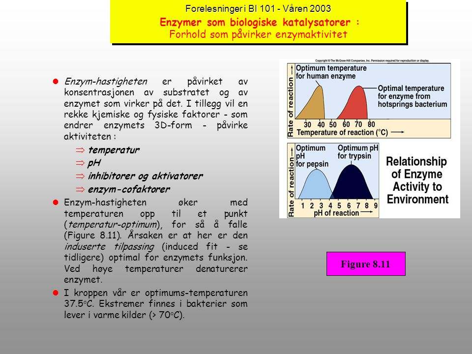 Forelesninger i BI 101 - Våren 2003 Forelesninger i BI 101 - Våren 2003 Enzymer som biologiske katalysatorer : Hvilke former kan enzymer ha ? (forts.)