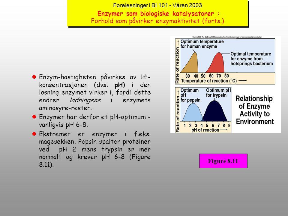 Forelesninger i BI 101 - Våren 2003 Forelesninger i BI 101 - Våren 2003 Enzymer som biologiske katalysatorer : Forhold som påvirker enzymaktivitet lEn