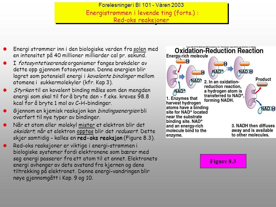 """Forelesninger i BI 101 - Våren 2003 Forelesninger i BI 101 - Våren 2003 Energistrømmen i levende ting Energi er per definisjon : """"kapasitet til å gjør"""